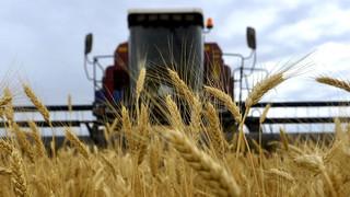 Экспорт казахстанского зерна может сократиться до 5 млн тонн
