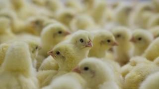 Омский Россельхознадзор ввёл ограничения на ввоз птицеводческой продукции с Республики Казахстан