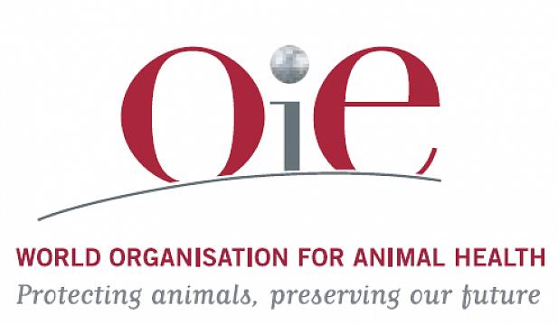 Республика Казахстан получил признание как страна свободная от ящура и африканской чумы свиней