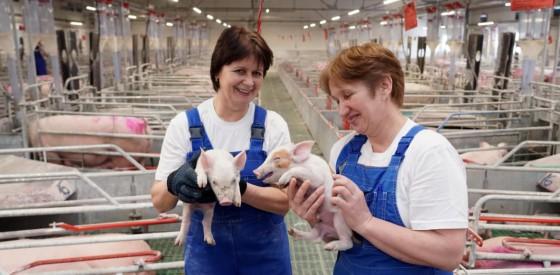 Свиноводческая ферма «АГРО-ИНВЕСТ-КАРАТАЛ»